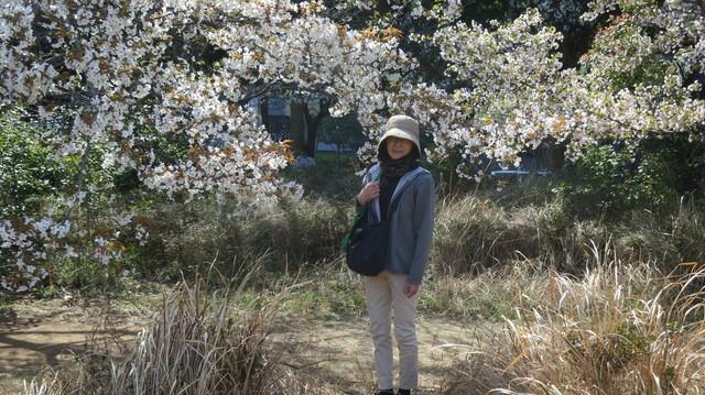 姥桜も吉野桜に華を添えている: マリンタウン安らぎの里(神宿)